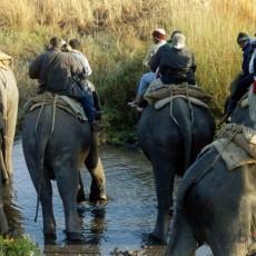 PARCHI INDIANI: Kaziranga e Assam   wildlife safari viaggio ruby group viaggi individuali tipologia viaggio subcontinente indiano siti unesco nord india india orientale himalaya etnie e tribu archeologia