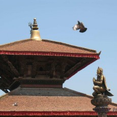 NEPAL: Nepal explorer   wildlife safari viaggi individuali siti unesco paesi himalayani nepal paesi himalayani himalaya