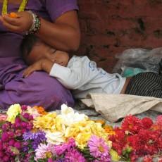 NEPAL• partenze garantite   wildlife safari tipologia viaggio subcontinente indiano siti unesco partenze garantite 2 paesi himalayani nepal paesi himalayani nepal homepage post himalaya