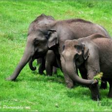 INDIA SUD: Thrissur Pooram   Festival degli elefanti   viaggio ruby group viaggi individuali viaggi di gruppo tipologia viaggio tamil nadu e isole andamane sud india subcontinente indiano kerala homepage post festivals eventi archeologia