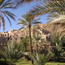OMAN: sultanato di miti • Partenze garantite   wildlife safari viaggi di gruppo siti unesco partenze garantite 2 oman medio oriente