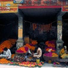 INDIA NORD: Sari e Sadu • partenze garantite   viaggio ruby group viaggi di gruppo tipologia viaggio subcontinente indiano siti unesco rajasthan partenze garantite 2 nord india india centrale e del nord homepage post