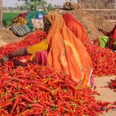 INDIA NORD: triangolo d'oro + nepal • partenze garantite   viaggi individuali tipologia viaggio subcontinente indiano rajasthan partenze garantite 2 nord india nepal paesi himalayani nepal india centrale e del nord himalaya