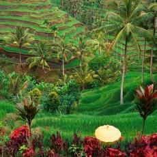 INDONESIA •  Island Hopping   viaggi individuali viaggi di nozze tipologia viaggio siti unesco indonesia estremo oriente beach spa