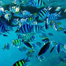 INDONESIA • Nascondigli Remoti   Isola Bidadari   viaggi individuali tipologia viaggio indonesia estremo oriente beach spa