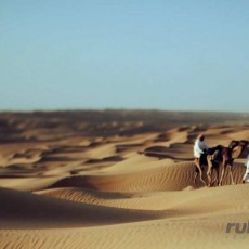 OMAN: Rub al Khali Expedition • Partenze Gruppo   wildlife safari viaggi individuali oman medio oriente