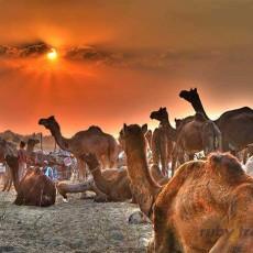 RAJASTHAN • Fiera di Pushkar 9 gg   viaggio ruby group viaggi individuali viaggi di gruppo tipologia viaggio subcontinente indiano rajasthan nord india festivals eventi