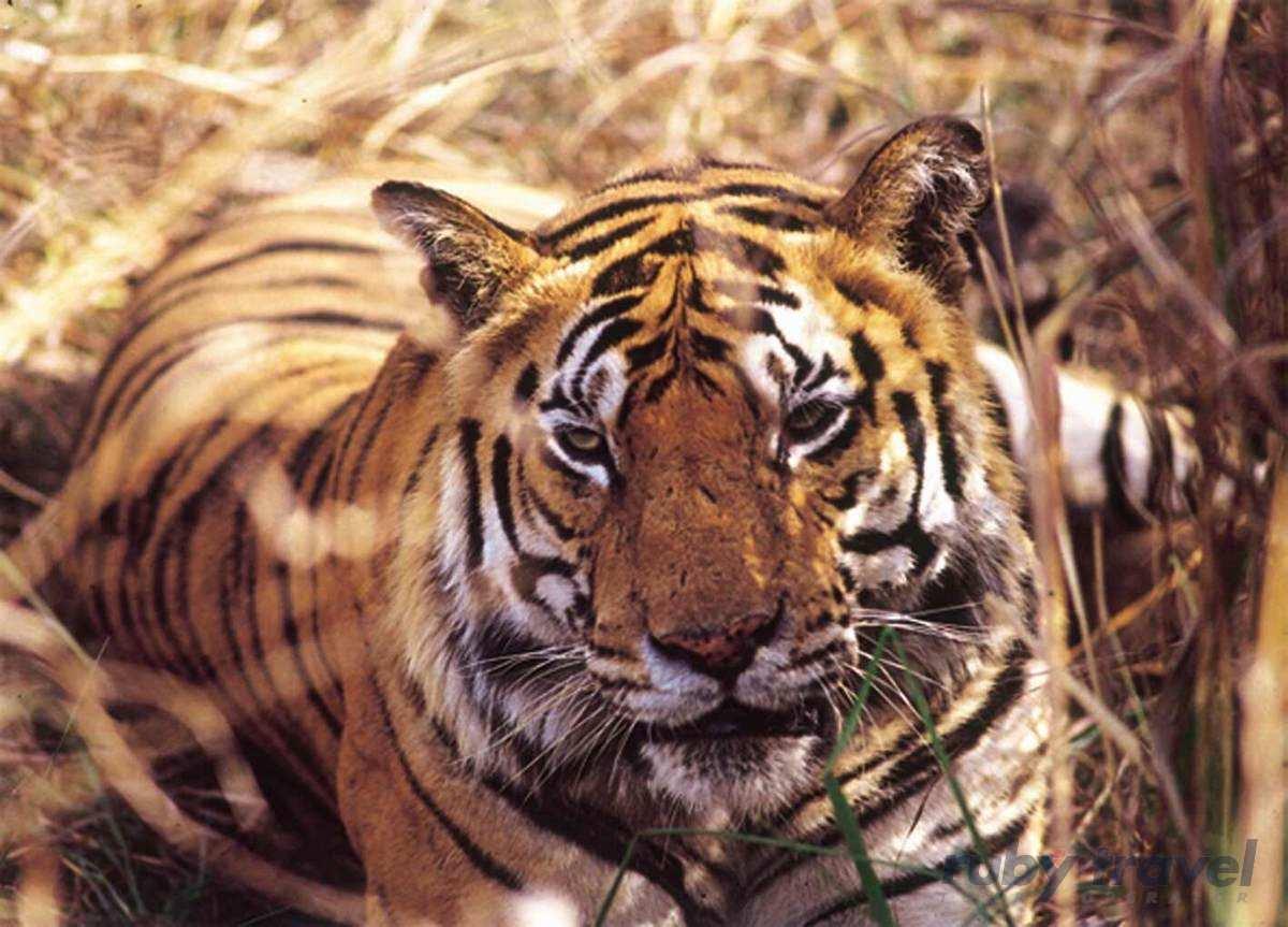 Parchi Indiani Tigri E Bastar Ruby Travel Viaggi 100