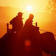 PARCHI INDIANI: Il mondo di Kipling   wildlife safari viaggio ruby group viaggi individuali tipologia viaggio subcontinente indiano nord india luxury experience india centrale e del nord