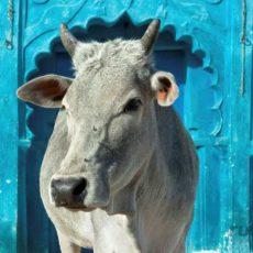 CAPODANNO INDIA: india e nepal   viaggi di gruppo subcontinente indiano siti unesco rajasthan nord india nepal homepage post festivals eventi archeologia