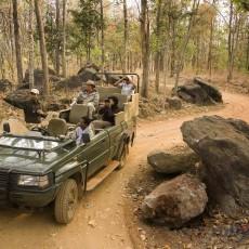 INDIA NORD: progetto tigre + nepal • partenze garantite   wildlife safari viaggi di gruppo subcontinente indiano siti unesco rajasthan partenze garantite 2 paesi himalayani nord india nepal paesi himalayani india centrale e del nord
