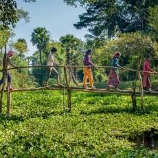 CAMBOGIA: cambogia explorer   viaggi individuali siti unesco estremo oriente cambogia archeologia