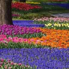 GIAPPONE: giardini zen • partenze garantite   viaggi di gruppo siti unesco partenze garantite 2 homepage post giappone