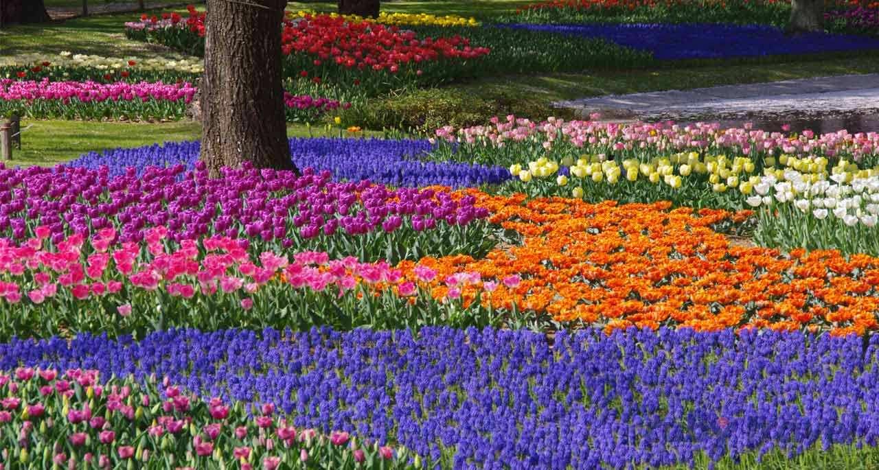 Giappone Giardini Zen Partenze Garantite Ruby Travel