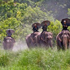 NEPAL• partenze garantite   wildlife safari tipologia viaggio subcontinente indiano siti unesco partenze garantite 2 paesi himalayani nepal paesi himalayani nepal himalaya