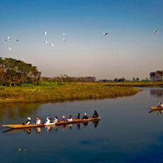 NEPAL: ritorno alla natura   wildlife safari viaggi individuali subcontinente indiano paesi himalayani nepal paesi himalayani nepal himalaya